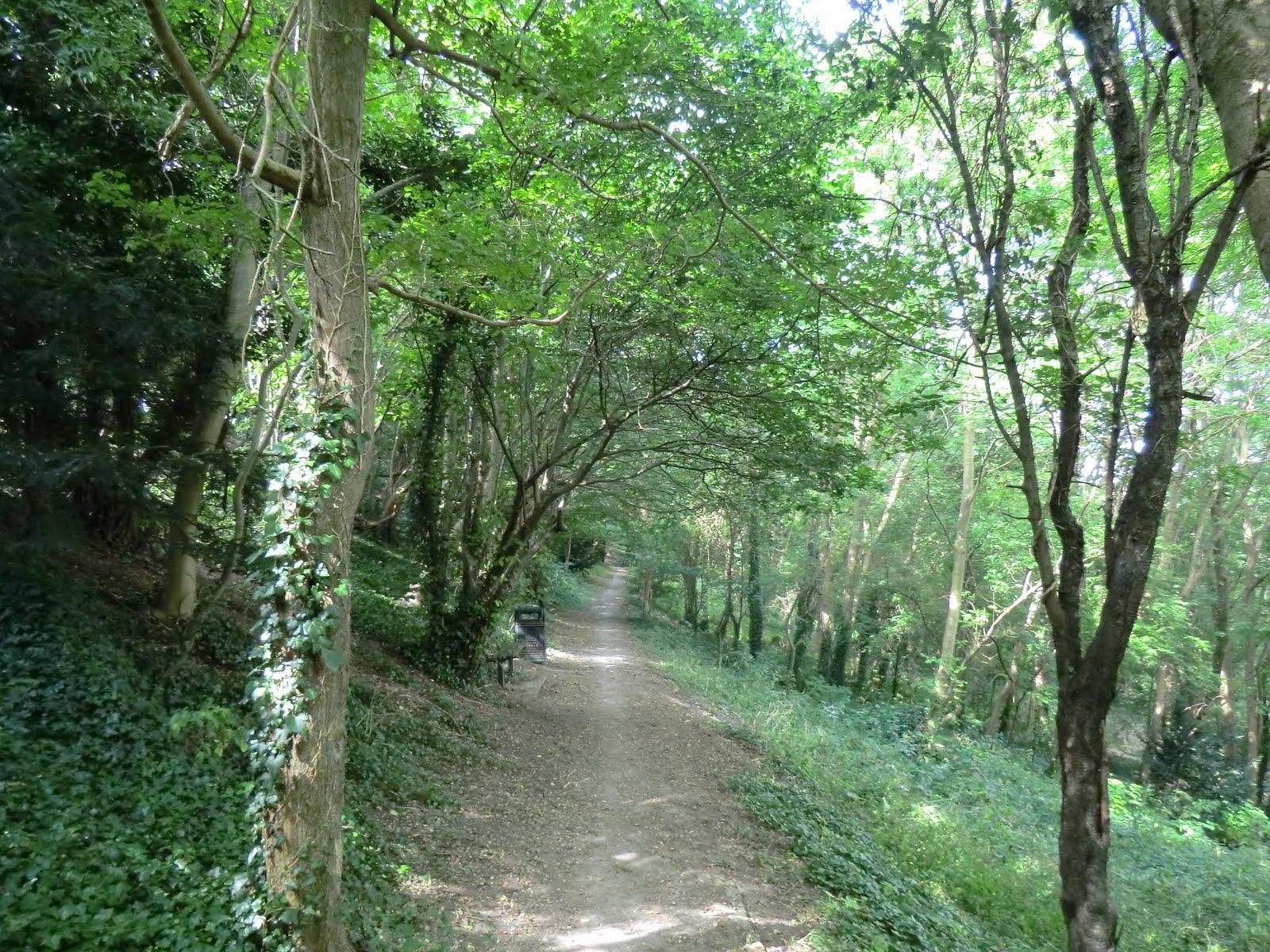 CIMG3474 Six Acre Community Wood, Cuxton