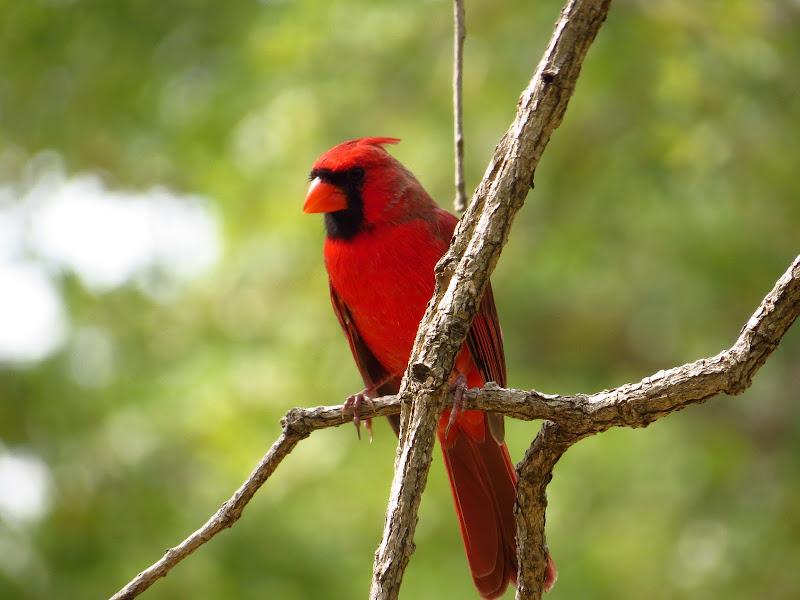 cardinal09162014-2.jpg