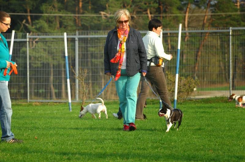 Kleinhundegruppe Mittwoch 17.30 Uhr - DSC_0055.JPG