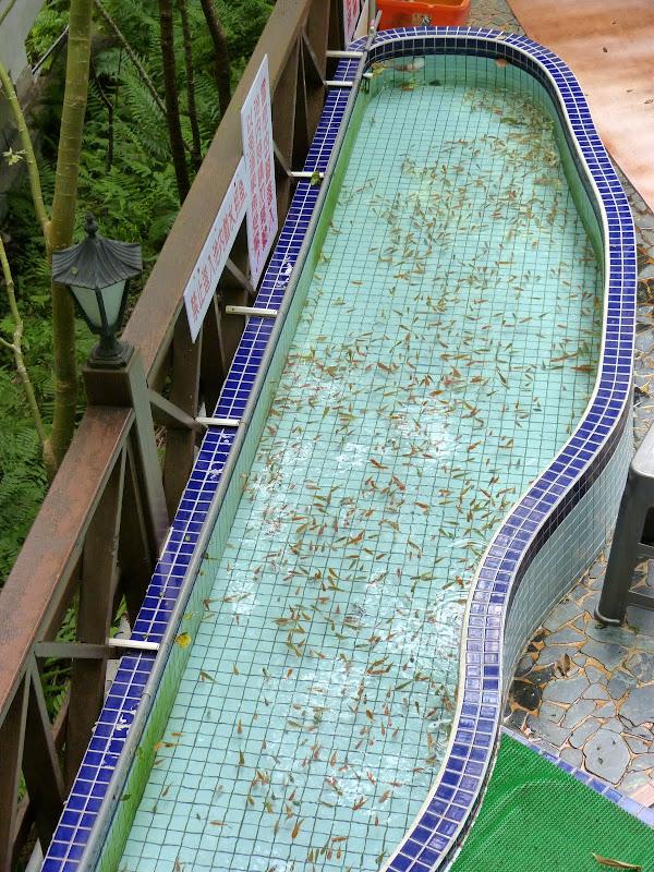 Puli ,divers ,vers Wushe,Lushan hot spring J 21 - P1200044.JPG