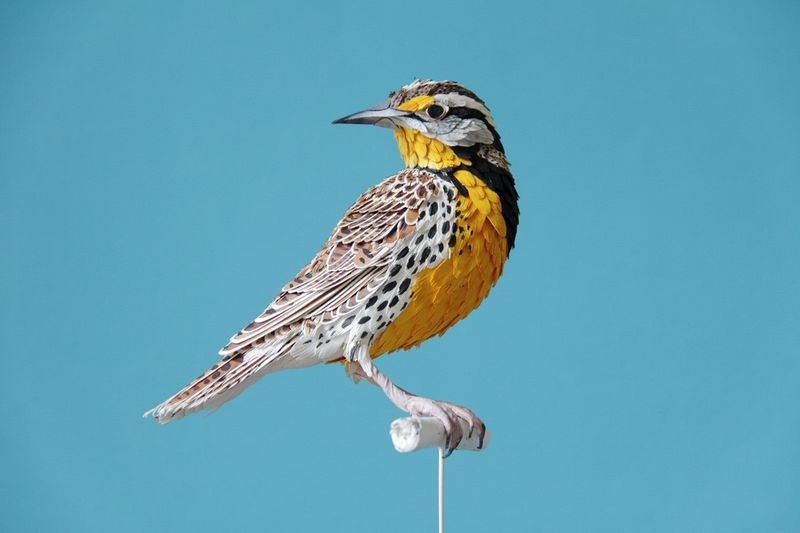 diana-beltran-herrera-birds-4