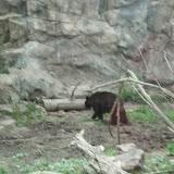 Zoo Snooze 2015 - 13.JPG