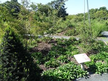 2018.08.21-020 jardin botanique