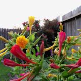 Gardening 2012 - 115_2145.JPG
