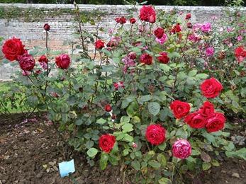 2017.08.10-040 la roseraie des vivaces