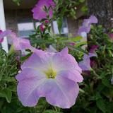 Gardening 2012 - 115_2058.JPG