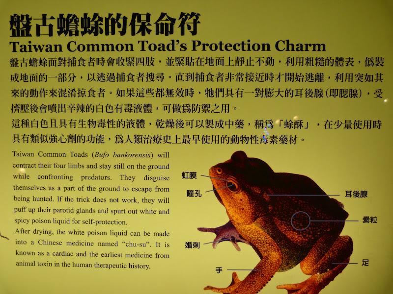 Yilan County.Taucheng , Musée Lanyang - P1230177.JPG