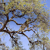 050-luipaard-1.jpg