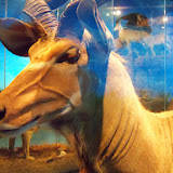 Houston Museum of Natural Science - 116_2827.JPG