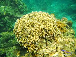 pulau harapan 8-9 nov 2014 diro 13