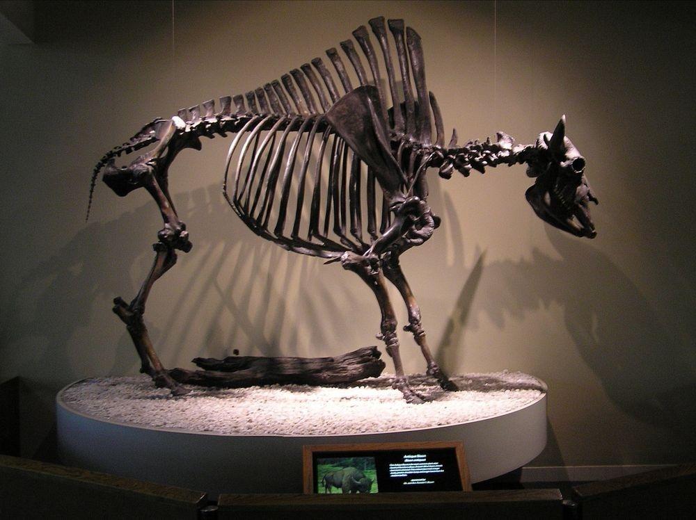 tar-pits-fossils-1