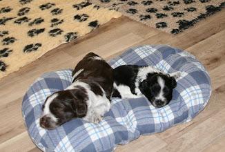 Photo: Kuschelzeit auf dem Kissen - Toffie und Erna