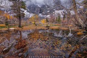 Naltar Valley in Bonanza of Autumn