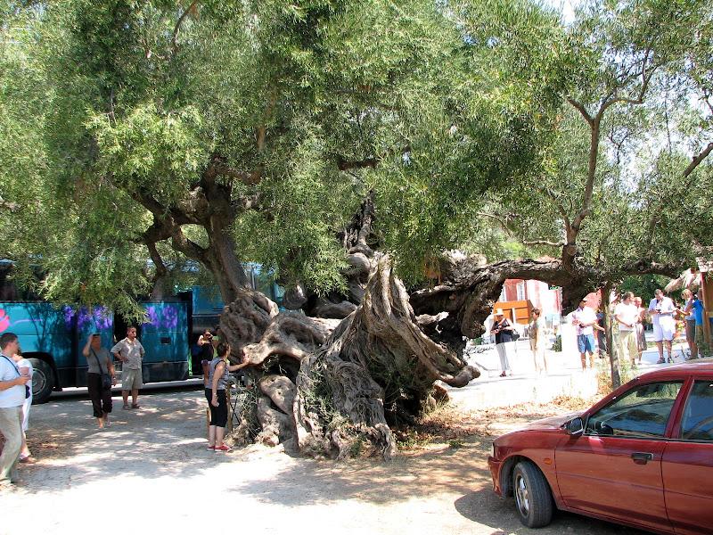 Wakacje w Zakynthos / Grecja - img_3838.jpg