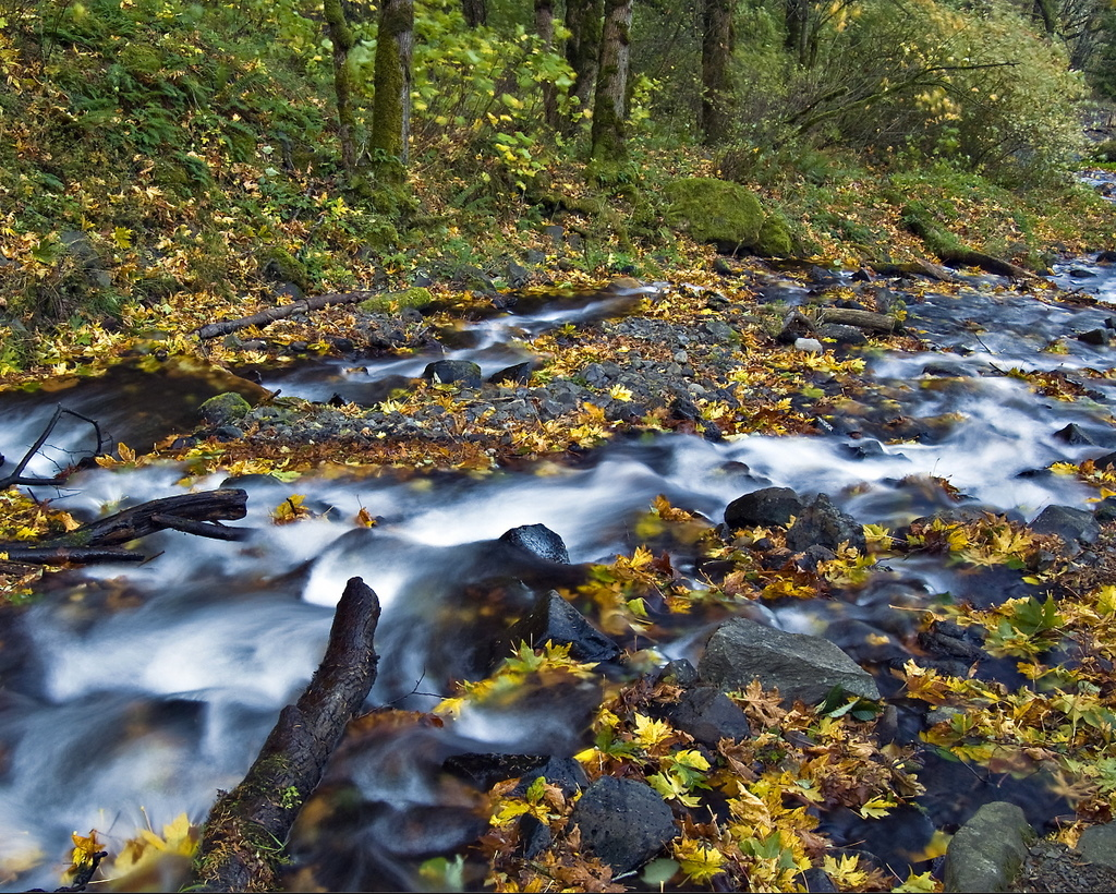 """Honorable Mention - Rich Sherman for """"Autumn in the Gorge"""""""