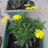 Gardening 2010 - 101_0368.JPG