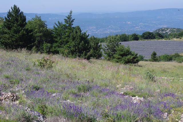 Biotope de Papilio alexanor. Lagarde d'Apt, 1200 m (Vaucluse), 28 juin 2015. Photo : J.-M. Gayman