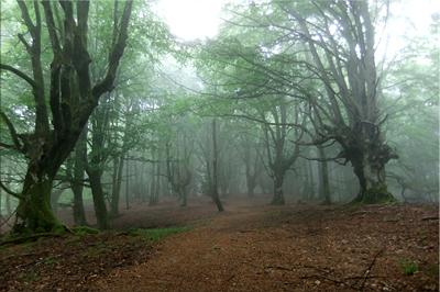 Niebla y lluvia en el hayedo