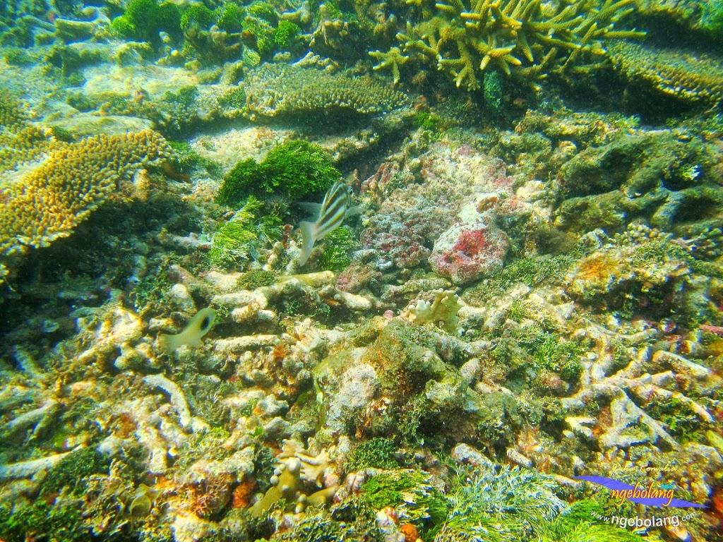 pulau harapan 8-9 nov 2014 diro 26