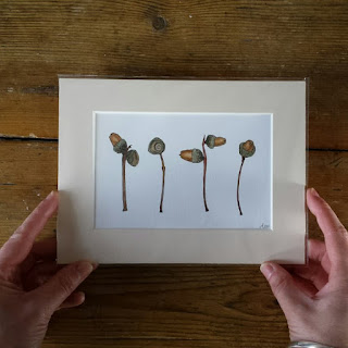 Botanical Acorn illustration by Alice Draws The Line