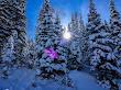 Snowshoeing White Pine - 5