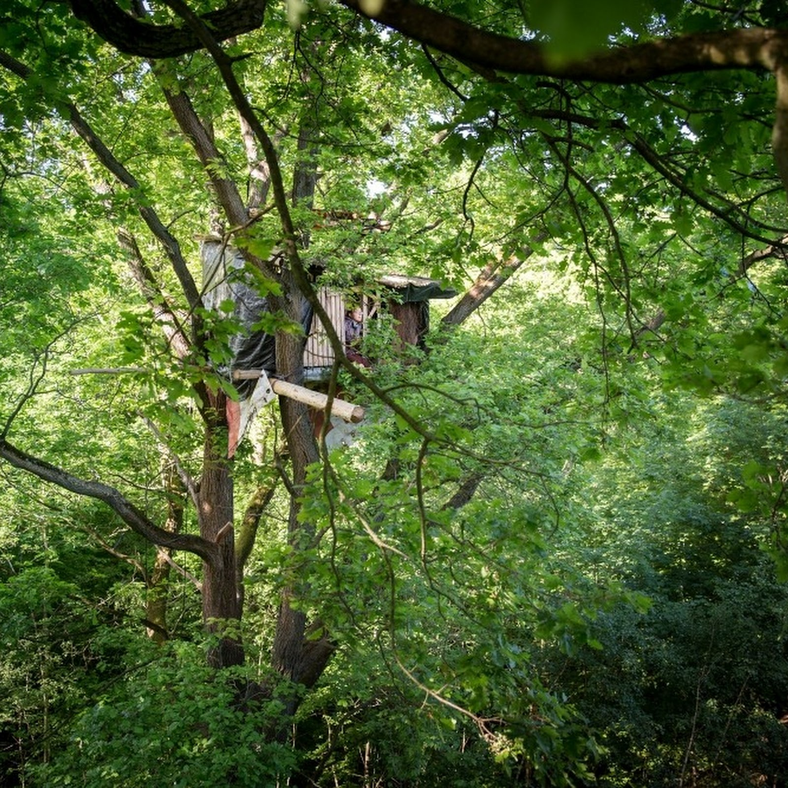 The Treetop Squatters of Hambach Forest