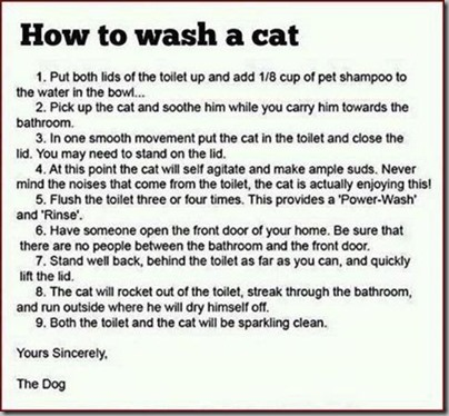 How to wash the cat