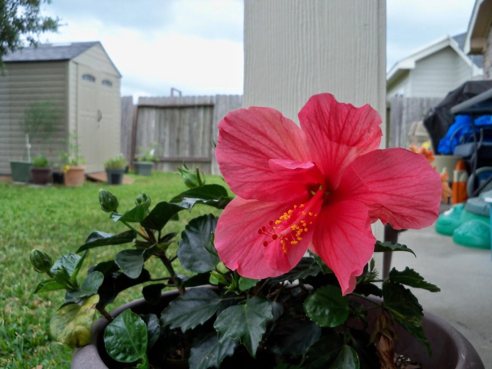 Gardening 2014 - 116_1751.JPG