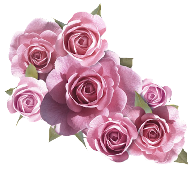 rosas-cor-rosa