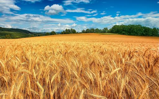 В Минсельхозе знают, как увеличить экспорт зерновых