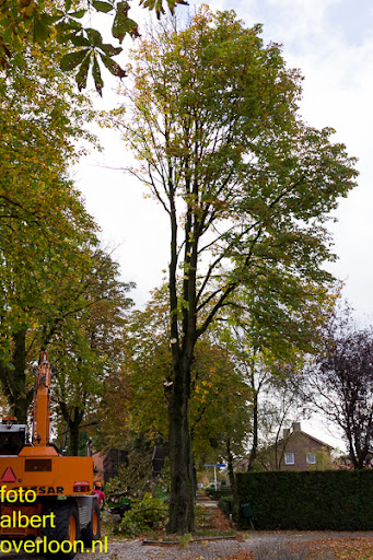 Bomen gekapt Museumlaan in overloon 20-10-2014 (15).jpg