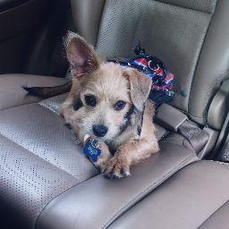 Yesenia Guzman