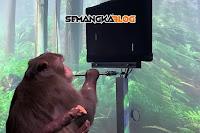Berkat Neuralink, Monyet ini Bisa Main Game Dengan Menggunakan Telepati
