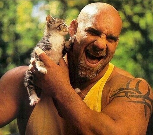 Bill Goldberg and a kitty