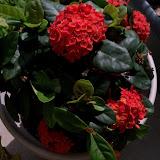 Gardening 2011 - 100_0167.JPG