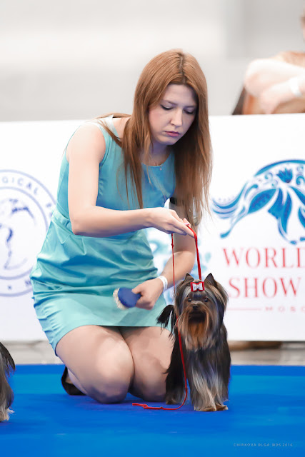 World Dog Show-2016 0047