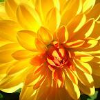 20120907-01-yellow-flower-macro.jpg