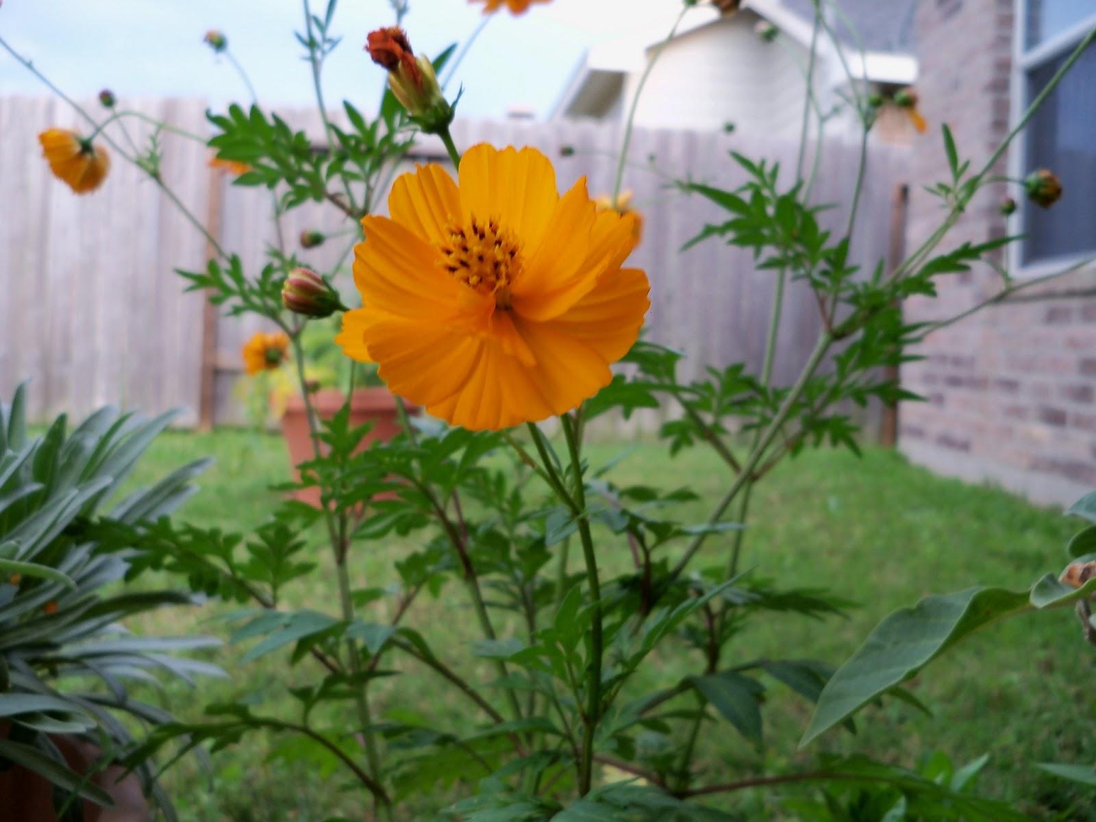 Gardening 2012 - 115_2169.JPG