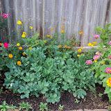 Gardening 2011 - 100_8816.JPG