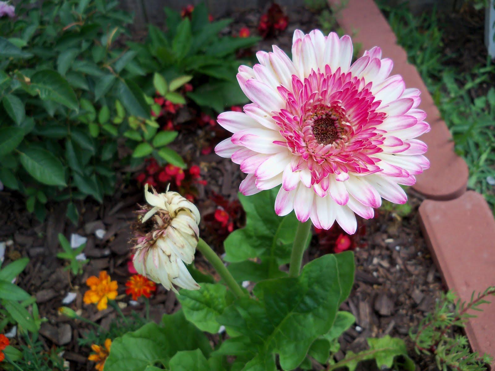 Gardening 2010 - 101_1623.JPG
