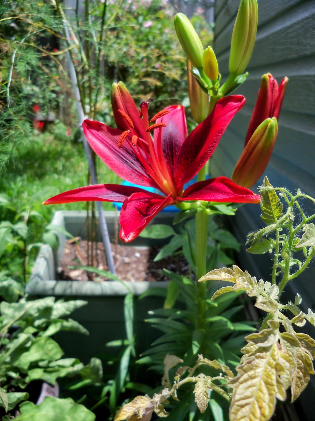 Gardening 2014 - 116_2971.JPG
