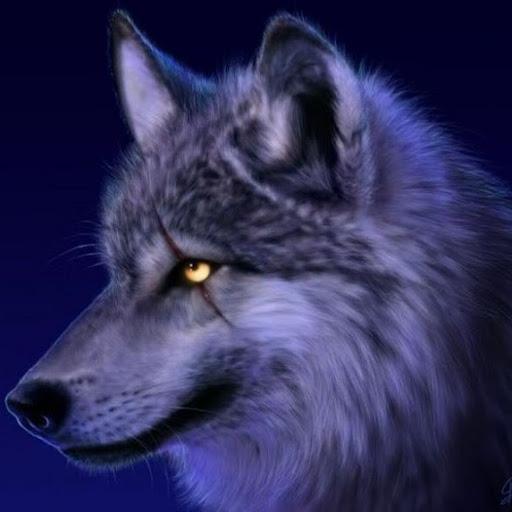 Kai Wolf Photo 10