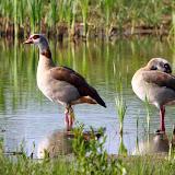 Vogels en dieren - IMG_6710.JPG
