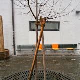 Оформление приствольного круга дерева, защита от вытаптывания, сбор дождевых потоков