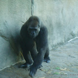 Pittsburgh Zoo Revisited - DSC05191.JPG