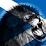 Simon Brodie's profile photo