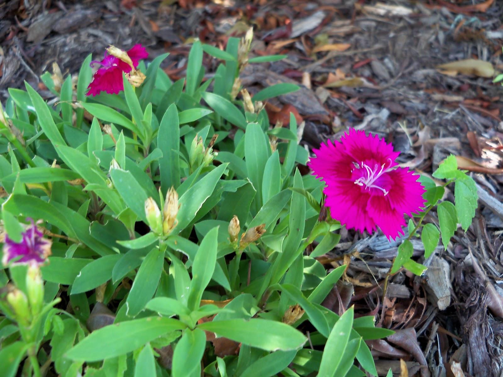 Gardening 2010, Part Three - 101_4528.JPG