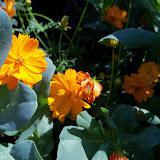Gardening 2011 - 100_9143.JPG