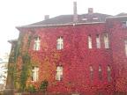 Výhodou je, že za podzim změní několikrát barvu fasády ;)