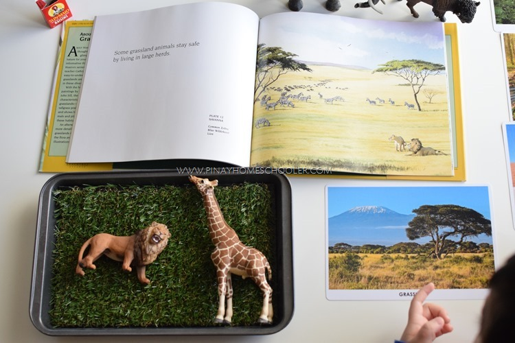 Animal Habitats: Grassland Study for Toddlers